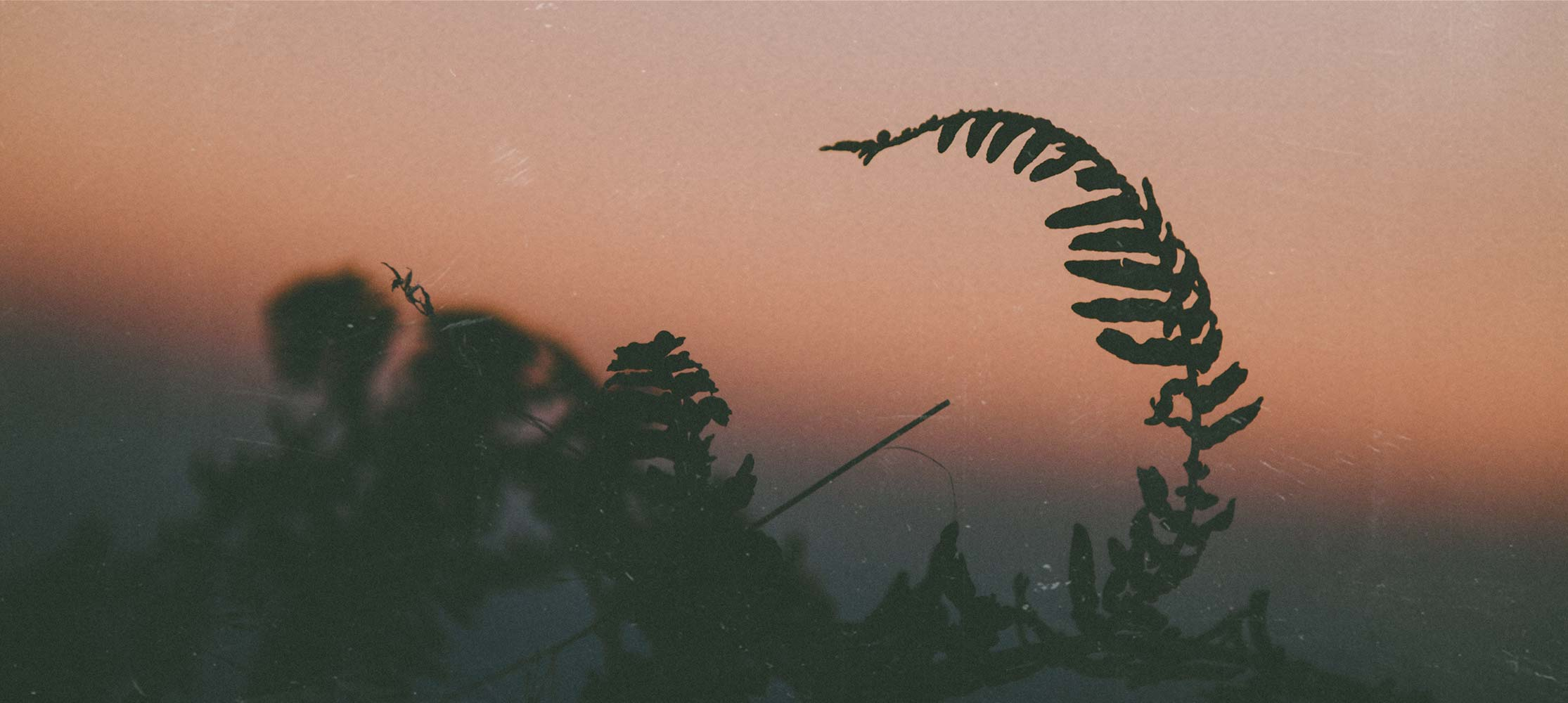 Pflanze im Sonnenuntergang Seelsorge